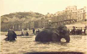Two Asian elephants called Salt and Pepper from Bostock & Wombwells bathing in the sea at Aberystwyth in 1911.